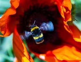 Bees can fly at altitudes greater than nine kilometres with a normal load (Source: stephanmorris/iStockphoto)
